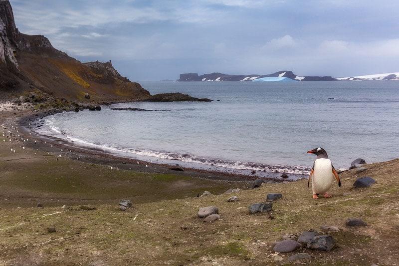 antarctica beach