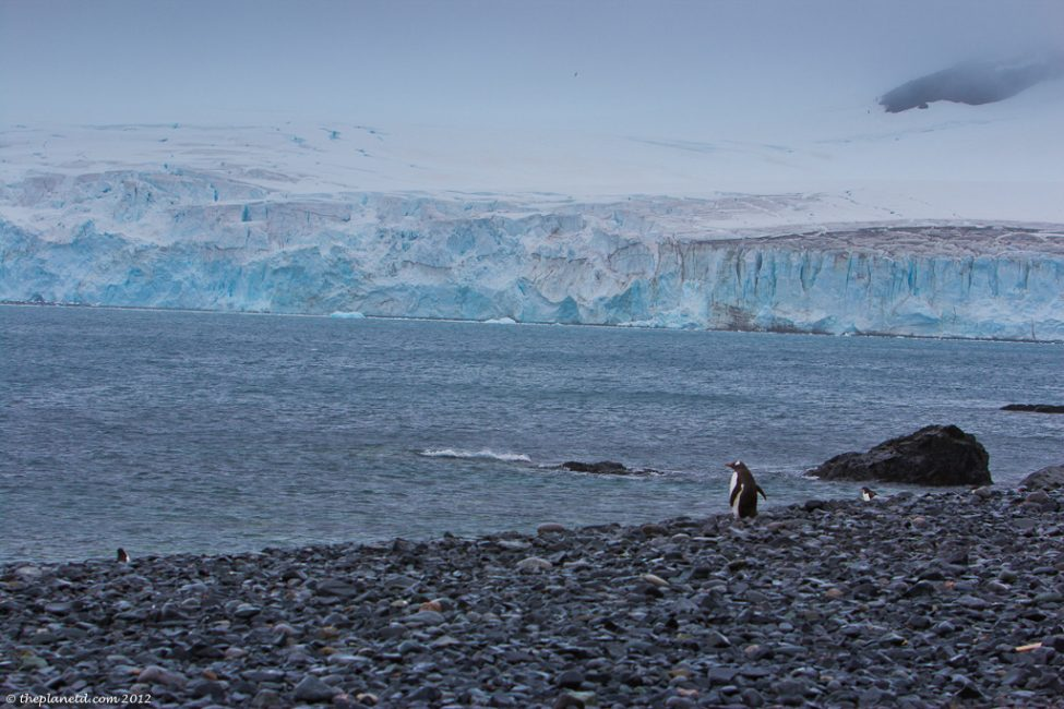 antarctica_penguins-2