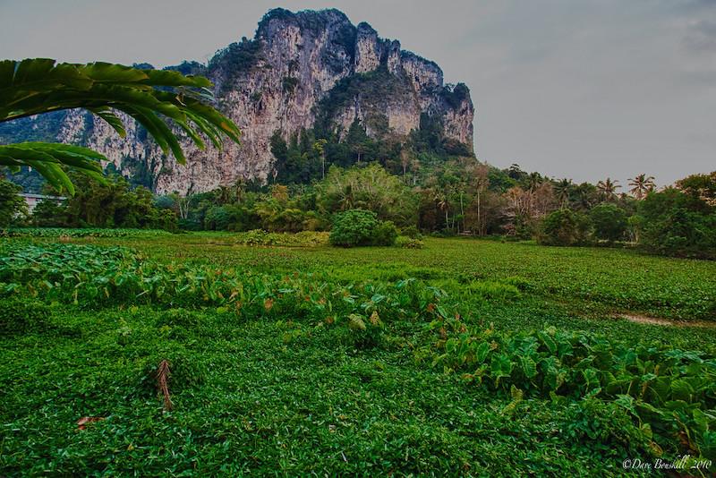fields in ao nang