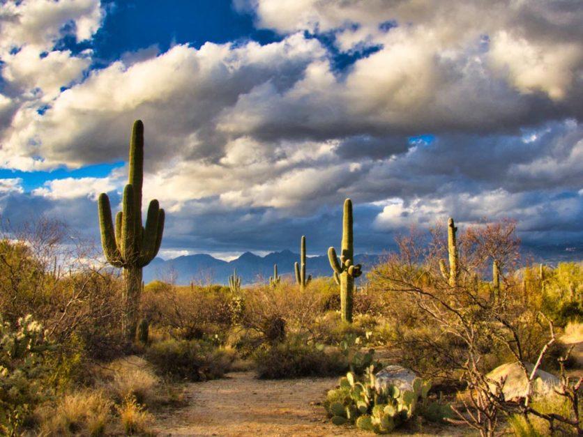 road trip arizona saguaro desert cacti
