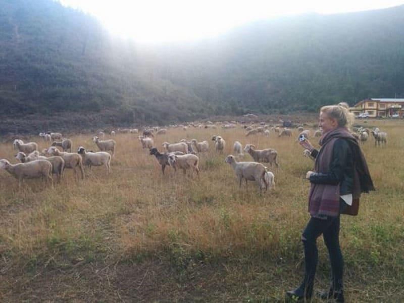 arunachal pradesh goats
