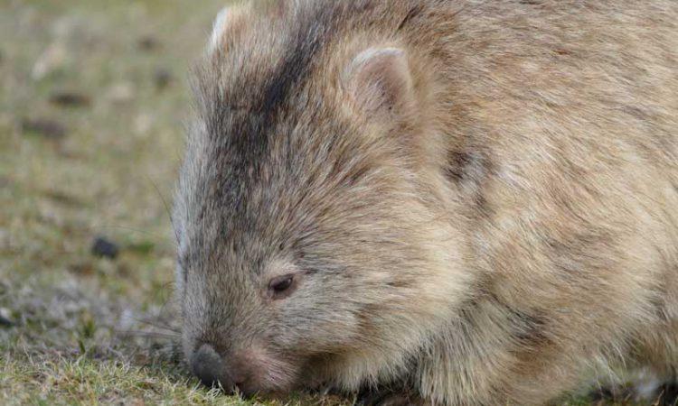 australian wildlife experiences