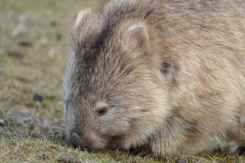 12 Amazing Australian Wildlife Experiences