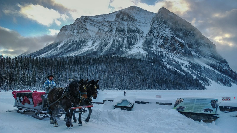 horses on lake louise winter
