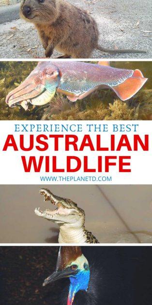 The best Australian wildlife experiences