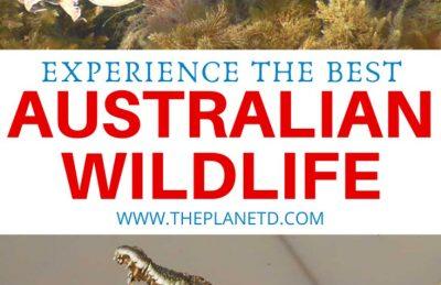 best australian wildlife experiences