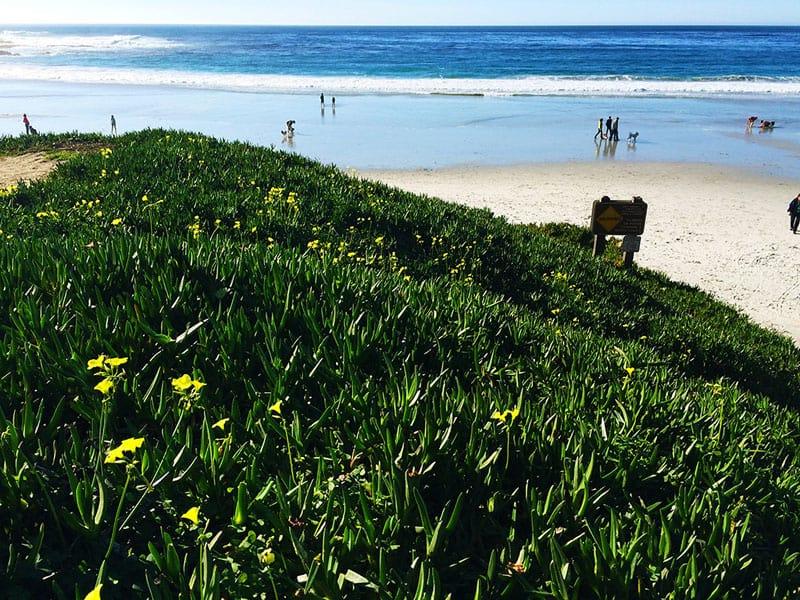 carmel | beaches in california