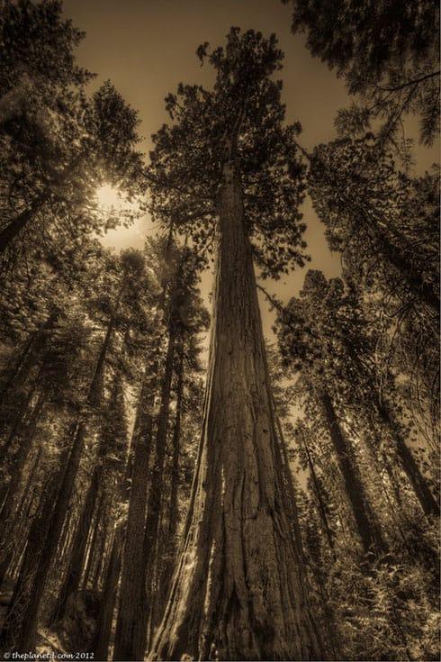 best of america sequoia