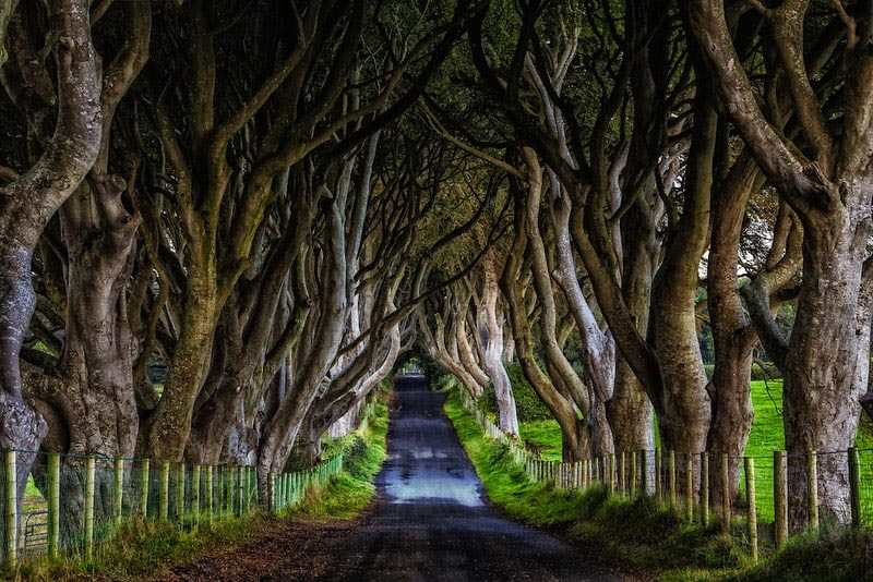 road trips dark hedges