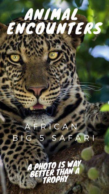 big 5 safari africa