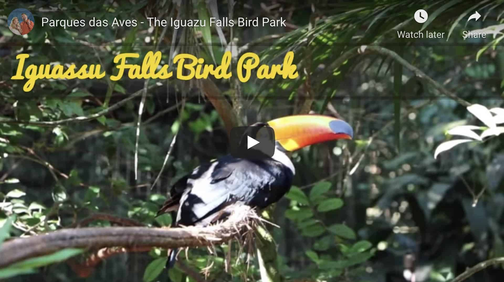 iguazu falls bird park video