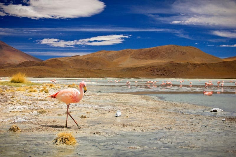 salt flat bolivia 3 day tour