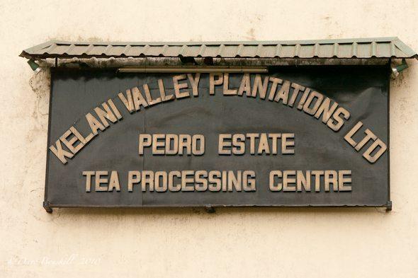 sri lanka plantation