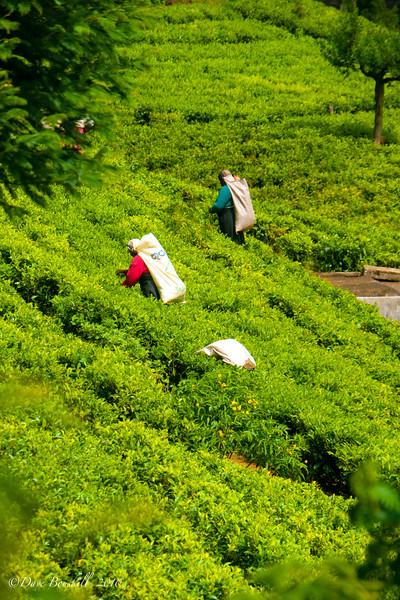 britain in sri lanka workers