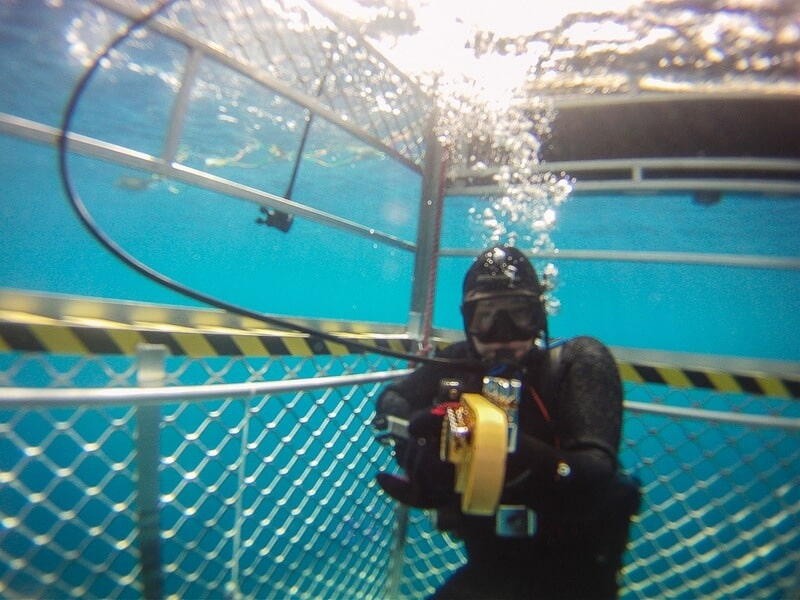 cage diving great white sharks Dave plays guitar under water