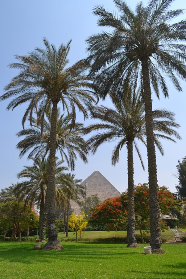 cairo travel guide to slow travel palm trees and pyramids