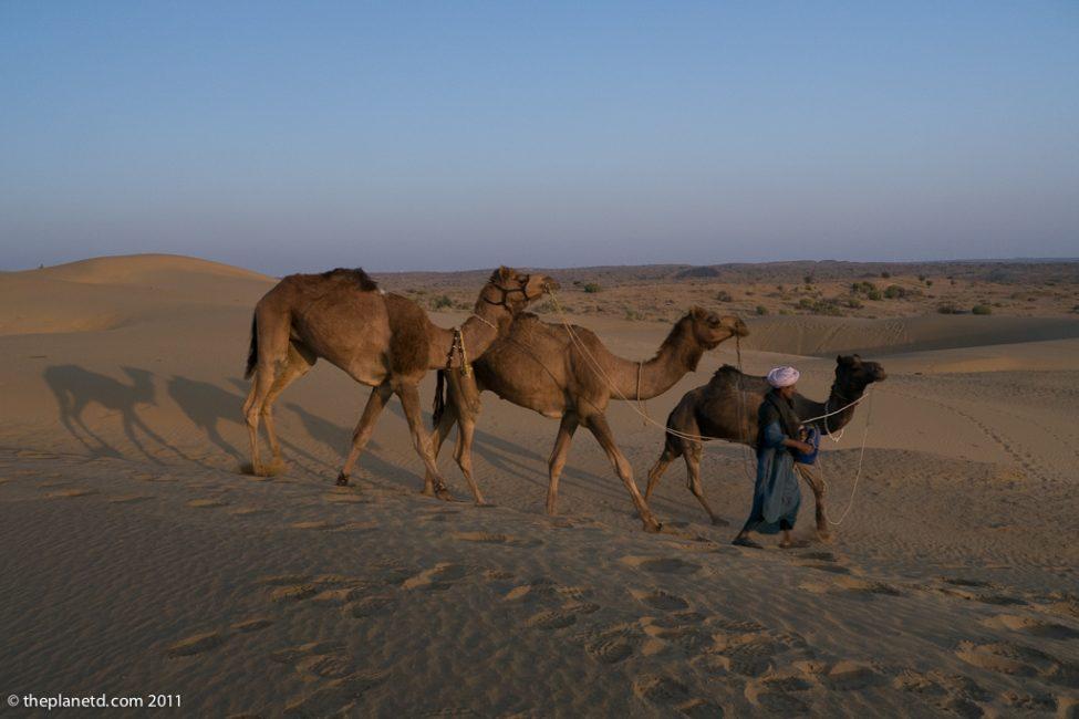 camel-safari-camel-guide-rajasthan-india