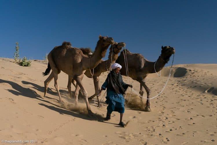 desert safari jaisalmer camel safari