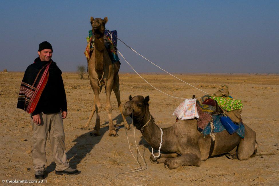 dave camel safari india