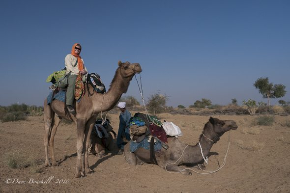 two-camels-on-safari-rajasthan