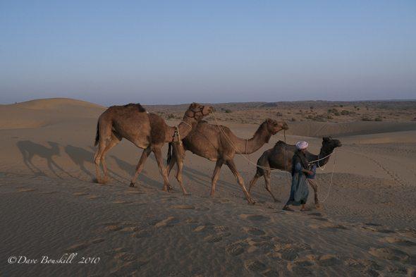camels-guide-in-rajasthan-desert