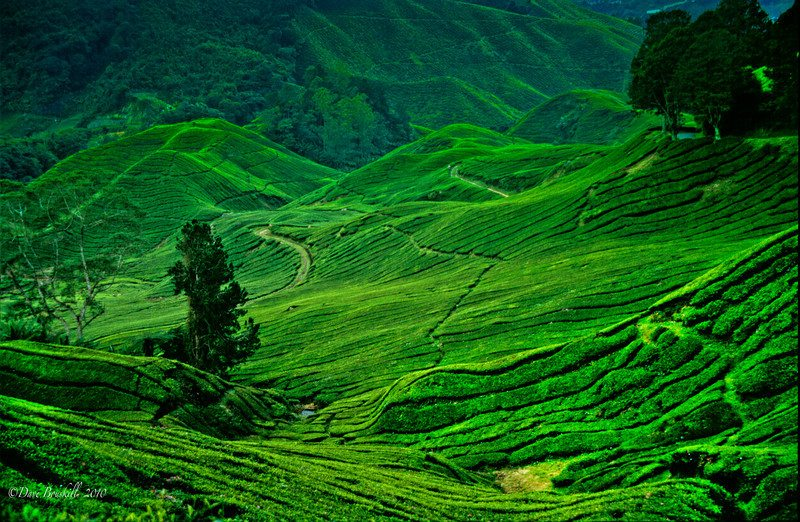 beautiful places in malaysia essay Beautiful places in sri lanka essay i propose to discuss it click to post on this thread ----.