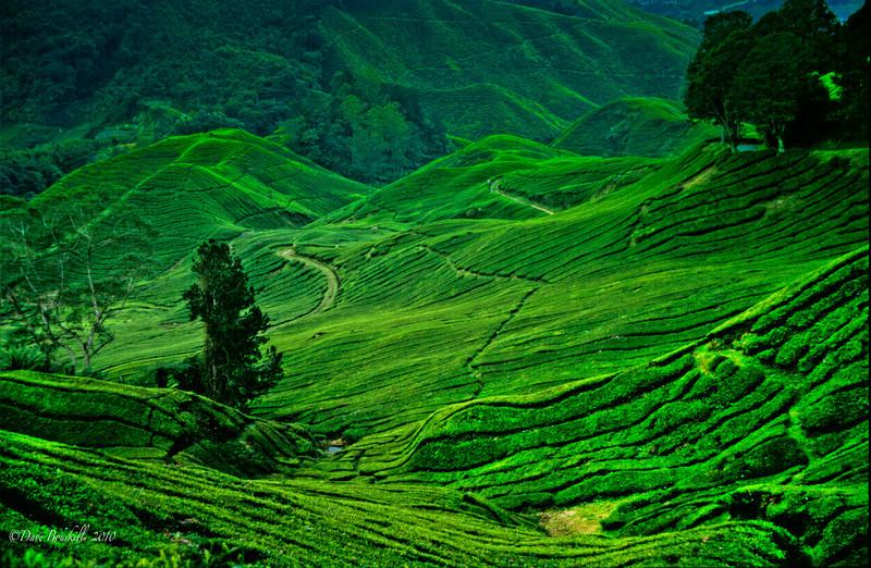 The Cameron Highlands: Tea Anyone?