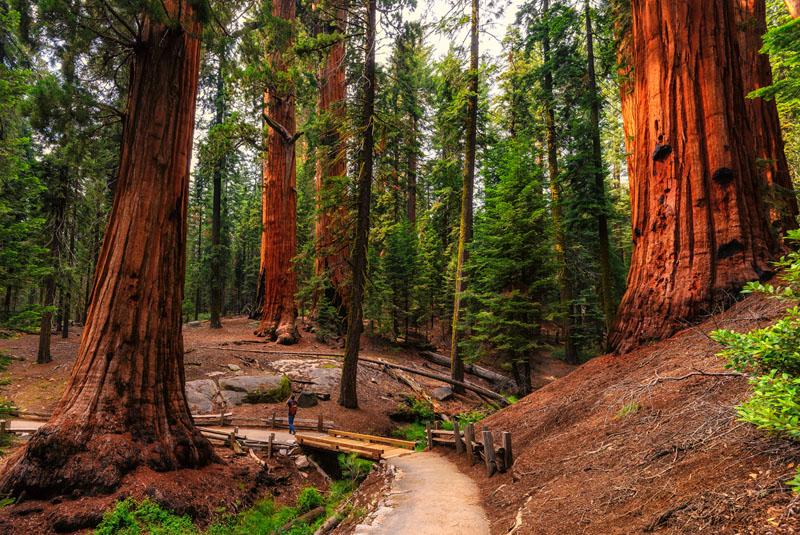 camping in california redwoods