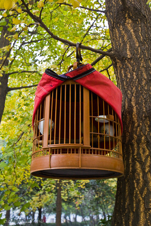 chengdu bird cage