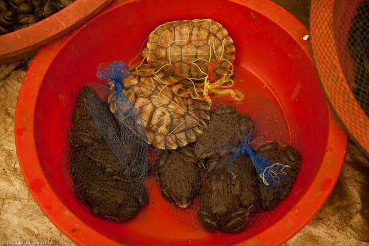 chinese cooking classes turtles