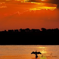 chobe-national-park-sunset