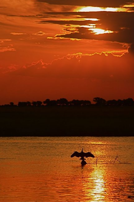 Bird spreads wings at sunset in Botswana Africa