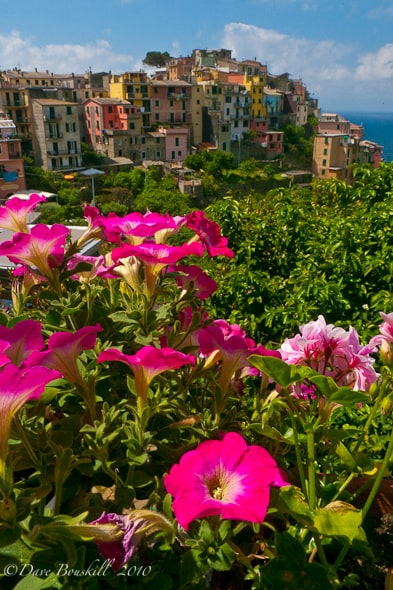 flowers looking at a village on Cinque terre