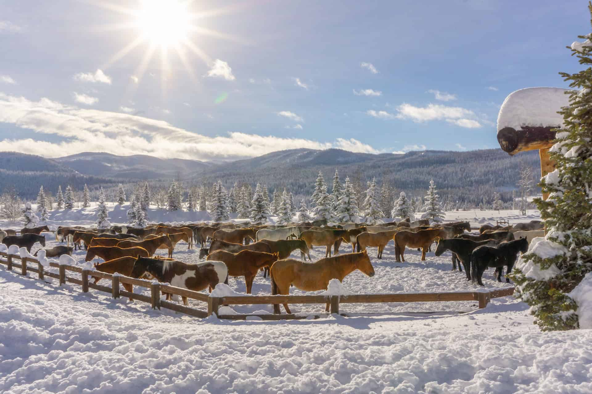 horseback riding in winter in colorado