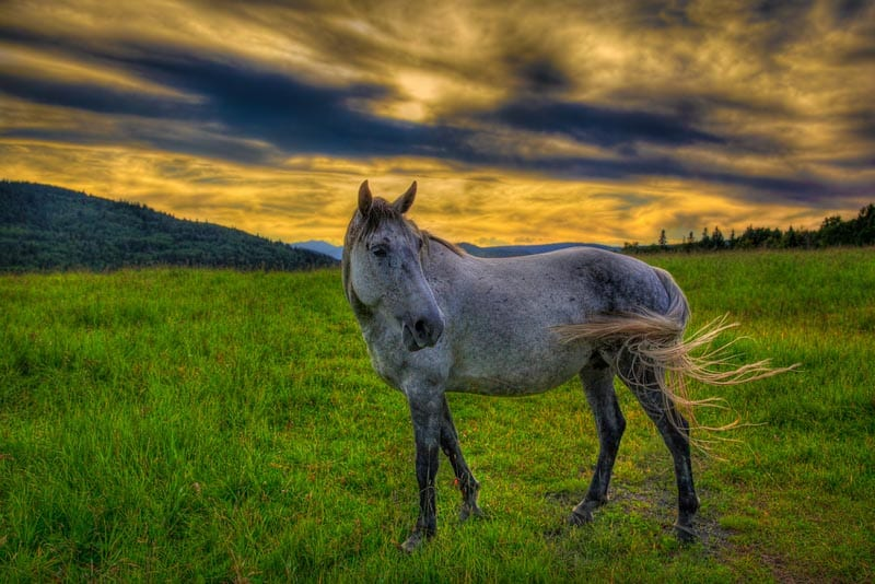 road trip itinerary alberta | horse at sunset
