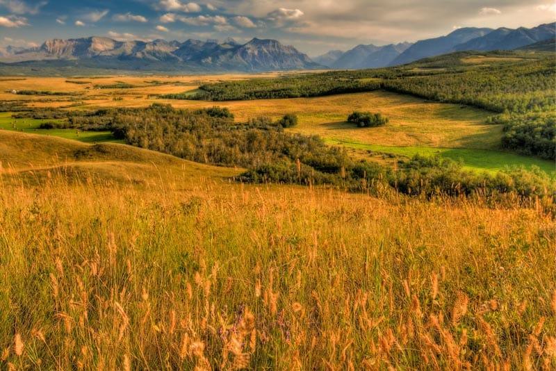 prairies and mountains of Alberta