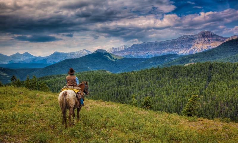 cowboy alberta | high mountain trail ride