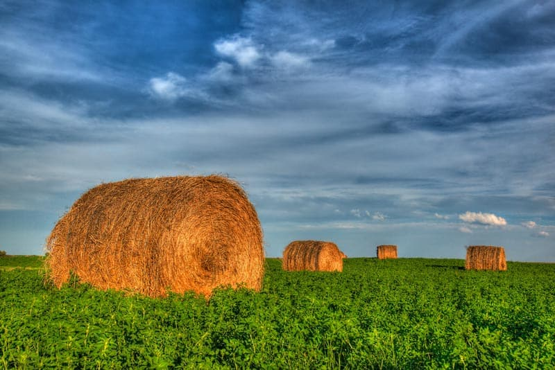 cowboy trail alberta | bales of hay