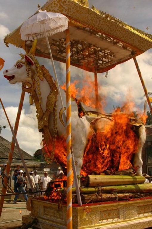 bali horse ceremony