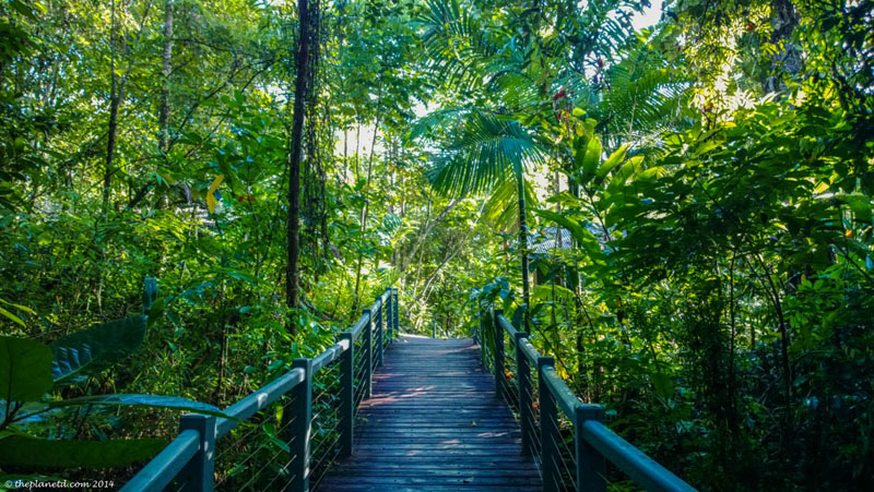what to do in queensland daintree rainforest
