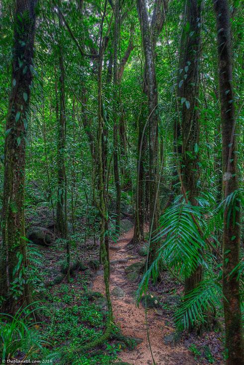 daintree rainforest forest