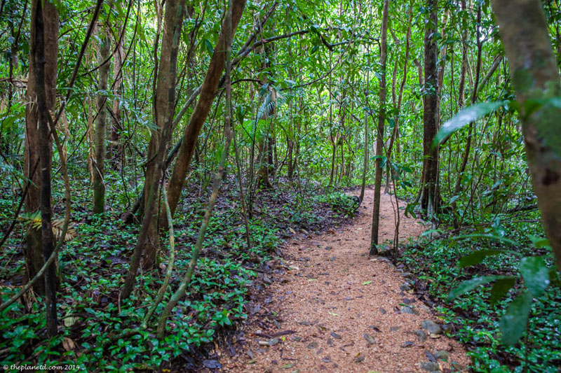 daintree rainforest trail