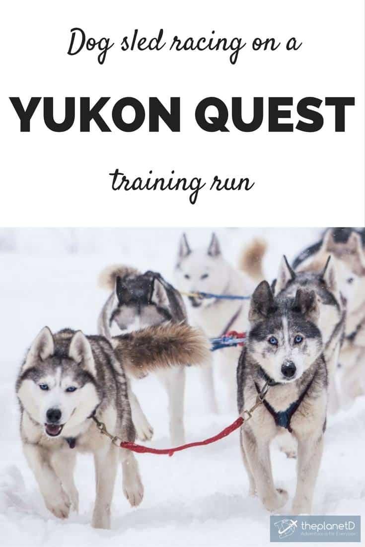dog sled racing on a Yukon Quest training run