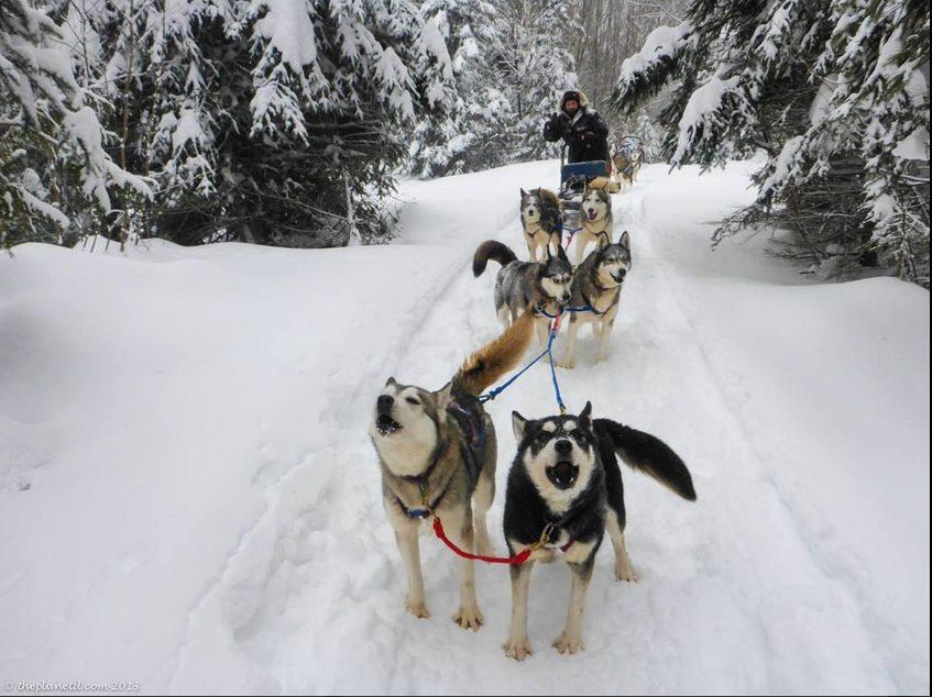 ontario dogsledding