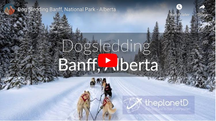 dogsledding in banff