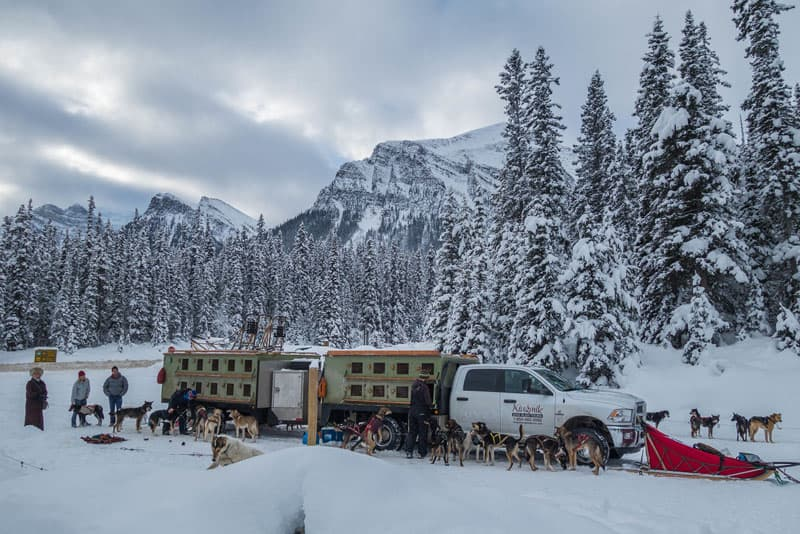 dogsledding banff truck