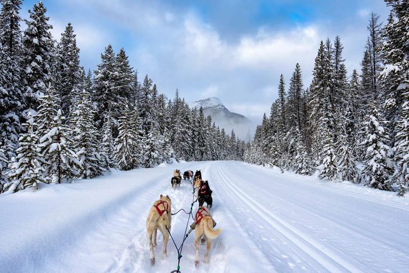 things to do in banff dogsledding banff winter