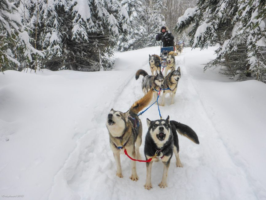 Dogsledding Winterdance haliburton ontario