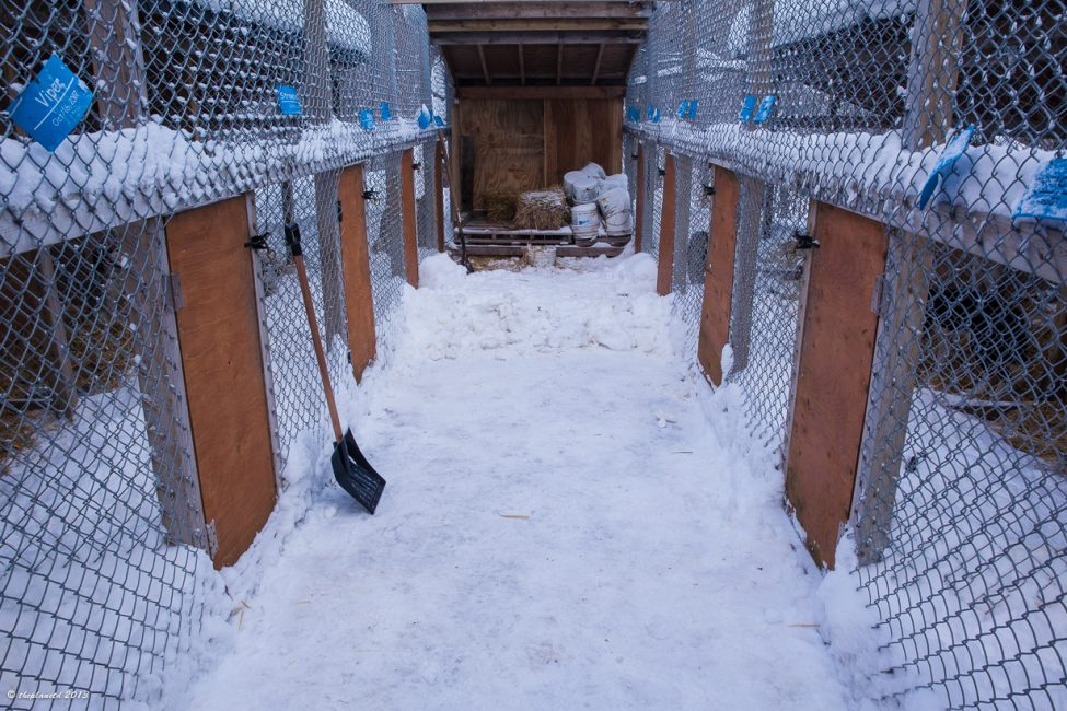 The race dogs kennels at Winterdance