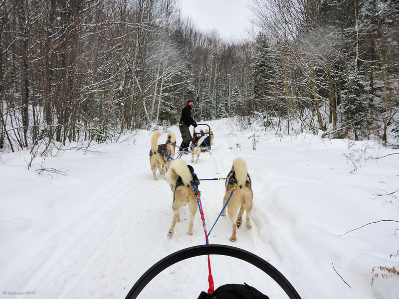dogsledding ontario dogs